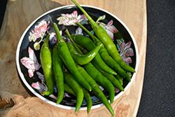 Sureno Hybrid Pepper (Capsicum annuum 'Sureno Hybrid') at Roger's Gardens