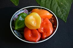 Trinidad Scorpion Hot Pepper (Capsicum chinense 'Trinidad Scorpion') at Roger's Gardens