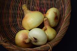 Yellow Granex Onion (Allium cepa 'Yellow Granex') at Roger's Gardens