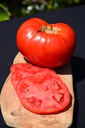Brandywine Red Tomato (Solanum lycopersicum 'Brandywine Red') at Roger's Gardens