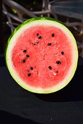 Sangria Watermelon (Citrullus lanatus 'Sangria') at Roger's Gardens